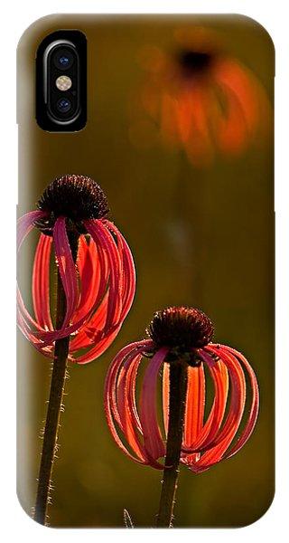 Pale Purple Cone Flowers IPhone Case