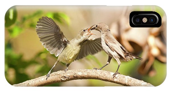 Behaviour iPhone Case - Palestine Sunbird Cinnyris Oseus by Photostock-israel