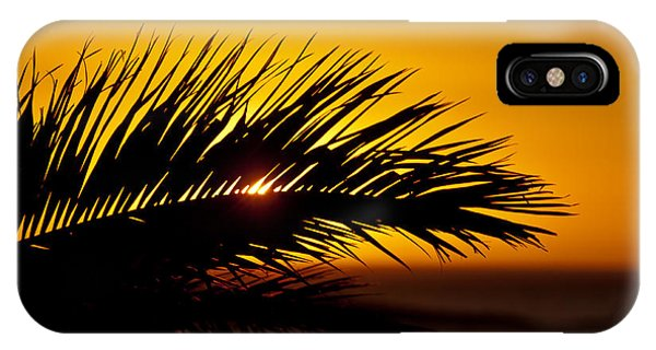 Palm Leaf In Sunset IPhone Case