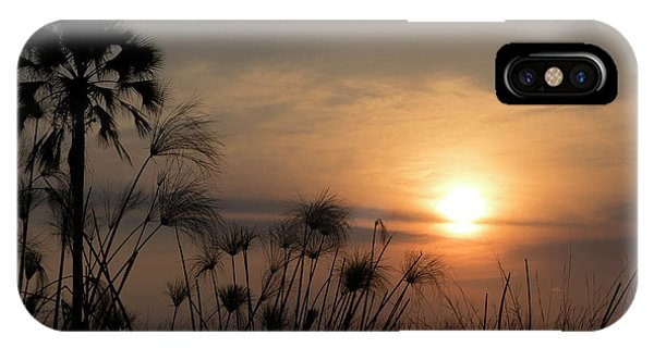 Palm Tree And Papyrus Plants At Dusk IPhone Case