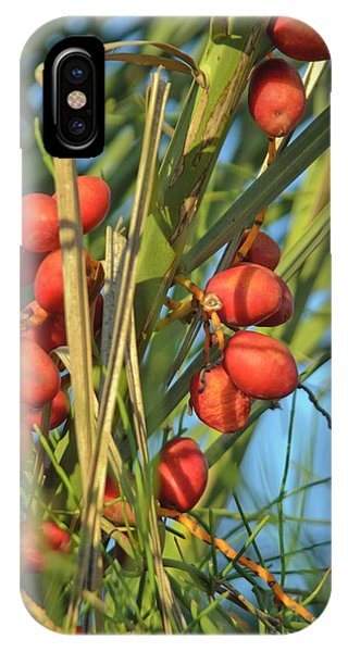 Psi iPhone Case - Palm Tree Dates by Photostock-israel