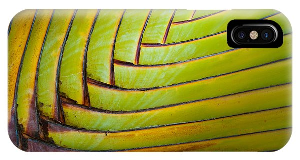 Palm Tree Leafs IPhone Case