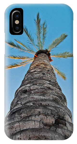 Palm Tree Looking Up IPhone Case