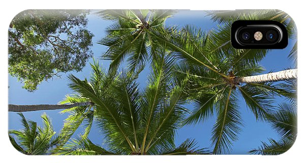 Qld iPhone Case - Palm Trees, Palm Cove, Cairns, North by David Wall