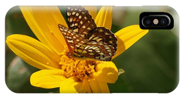 Palmer's Metalmark Butterfly IPhone Case