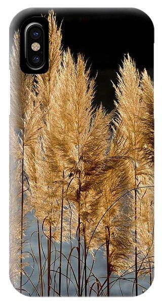 Monocotyledon iPhone Case - Pampas Grass (cortaderia Selloana) by Bob Gibbons