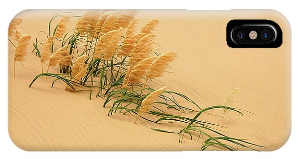 Sand iPhone Case - Pampas Grass In Sand Dune by Carl Bostek