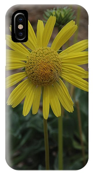 Panamint Daisey IPhone Case