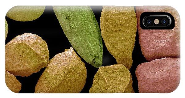 Mustard iPhone Case - Panch Phoran by Steve Gschmeissner