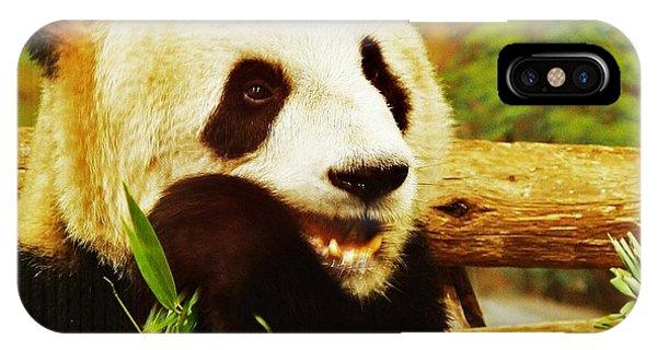 Panda Bear Phone Case by Al Fritz