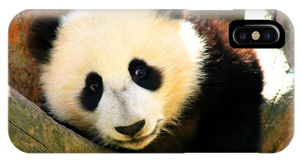 Panda Bear Baby Love IPhone Case