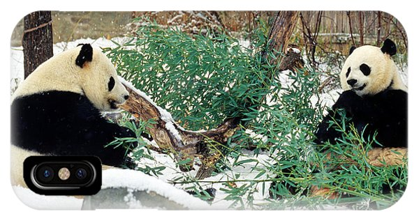 Panda Bears In Snow IPhone Case