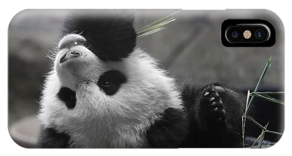 Panda Cub At National Zoo IPhone Case