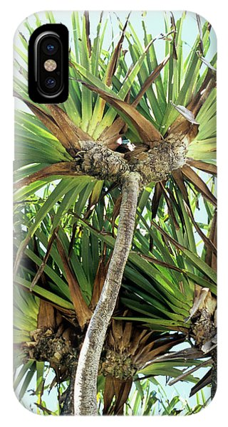 Monocotyledon iPhone Case - Pandanus Palm by Sinclair Stammers/science Photo Library
