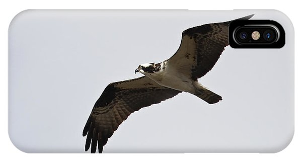 Pandion Haliaetus IPhone Case
