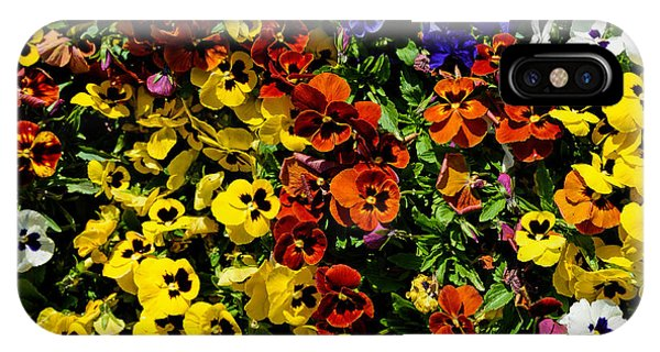 Pansy Color Mix  IPhone Case