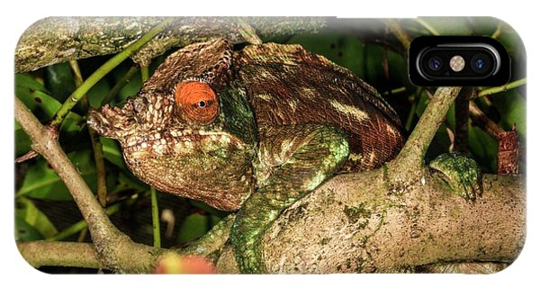 Psi iPhone Case - Panther Chameleon (furcifer Pardalis) by Photostock-israel