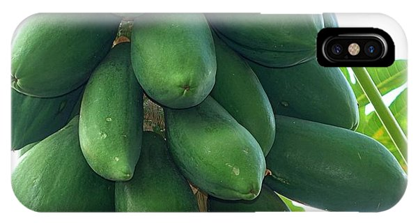 Papaya Tree With Green Papayas IPhone Case