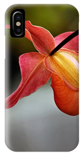 Paphiopedilum Orchid - Slipper Orchid IPhone Case