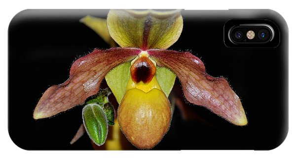 Paphiopedilum 'summer Ice' Orchid IPhone Case