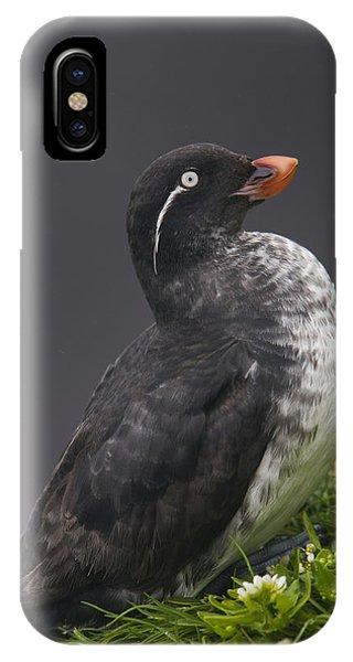 Auklets iPhone Case - Parakeet Auklet Sitting In Green by Milo Burcham