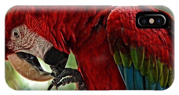 Parrot Preen Hdr IPhone Case