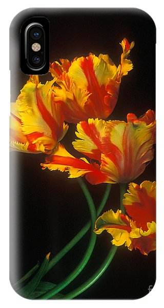 Parrot Tulips On Easter Morning Vertical IPhone Case