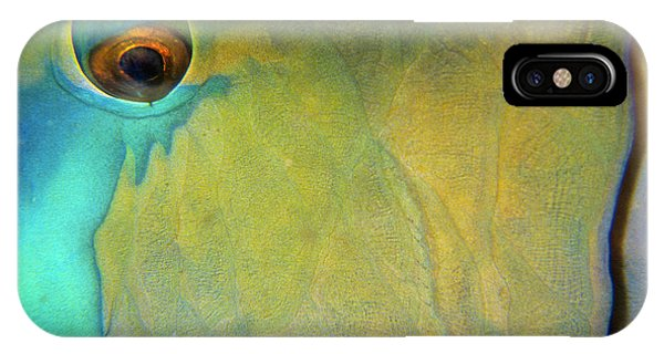 Parrotfish IPhone Case