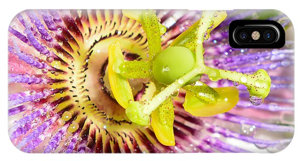 Passiflora The Passion Flower IPhone Case