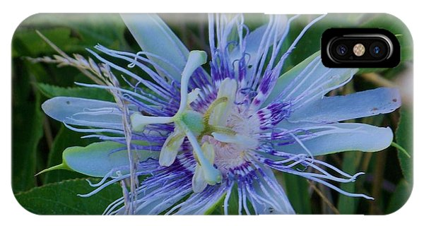 passion flower II IPhone Case