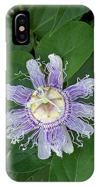 Passion Flower Iv IPhone Case