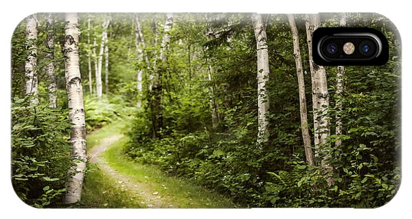 Hiking Path iPhone Case - Path In Birch Forest by Elena Elisseeva