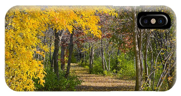 Path Through Autumn Trees IPhone Case