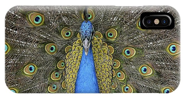 Patient Peacock IPhone Case