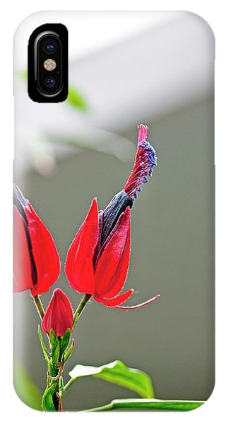 Stamen iPhone Case - Pavonia Multiflora by Dan Sams/science Photo Library