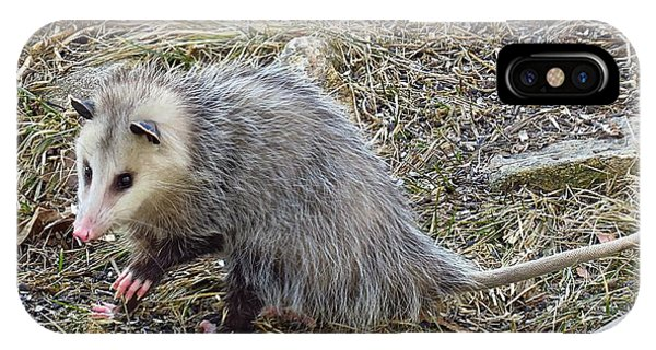 Pawing Possum IPhone Case