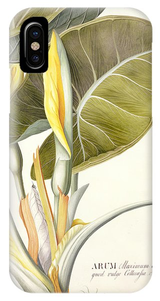 Flora iPhone Case - Arum Maximum by Georg Dionysius Ehret