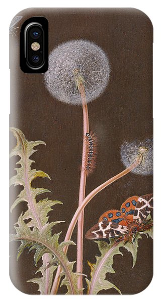 Caterpillar iPhone Case - Pd.380-1973 Dandelion With Insects by Margaretha Barbara Dietzsch