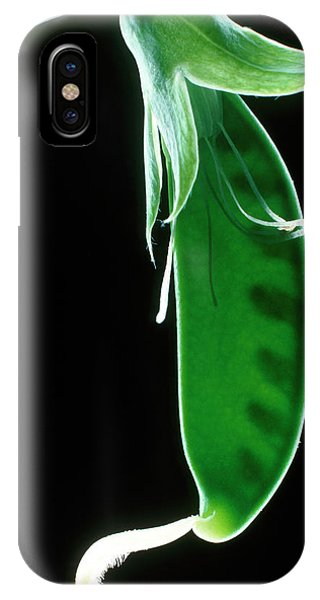 Stamen iPhone Case - Pea Pod by Dr. Jeremy Burgess/science Photo Library