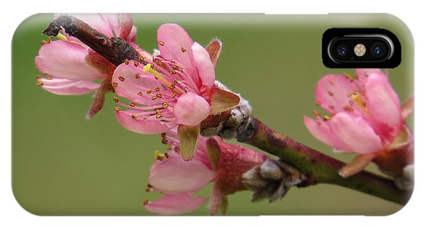 Peach Blossoms II IPhone Case