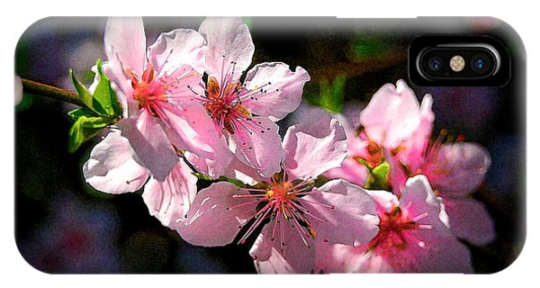 Peach Blossoms IPhone Case
