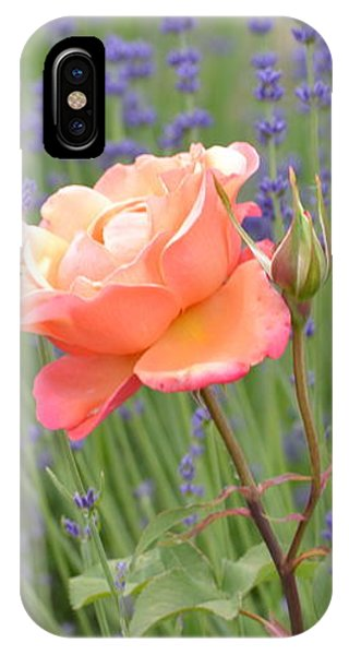 Peach Roses In A Lavender Field Of Flowers IPhone Case