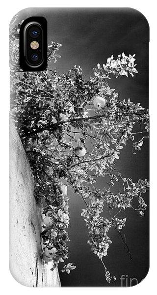 Peaches In Lisbon Phone Case by John Rizzuto