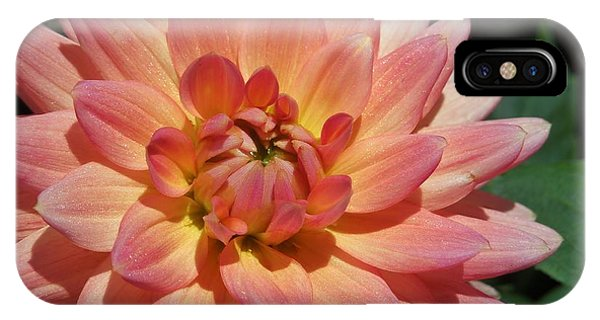 Peachy Dahlia IPhone Case