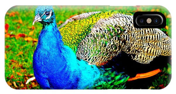 Peacock 2 IPhone Case