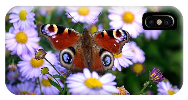 Peacock Butterfly Perched On The Daisies IPhone Case