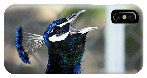 Peacock Calling IPhone Case