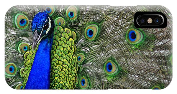 Peacock Head IPhone Case
