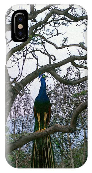 Peacock In Tree IPhone Case