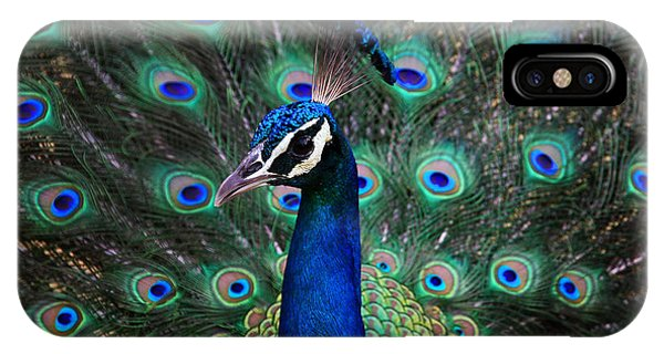 Peafowl iPhone Case - Peacock by Unknown